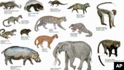 جانوروں کی 20 فیصد ریڑھ دار نسلوں کے ناپید ہونے کا خطرہ