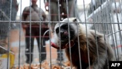 Kolumbijska policija prilikom potrage za prodavačima divljih životinja