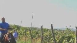 ქართული ღვინის ისტორია და მომავალი