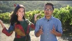 Apa Kabar Amerika: Menengok Industri Anggur di Napa Valley, California
