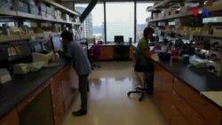 Embrionların genlərinin modifikasiyası