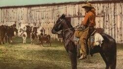 Rôle historique des cow-boys noirs