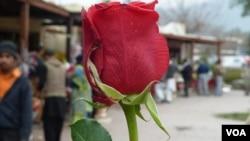 Le 14 février, jour de la Saint Valentin.
