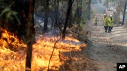 Petugas menyeret selang air untuk berusaha memadamkan kebakaran hutan di Bendalong, Australia (3/1).