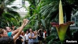 남북대학생들의 미국 식물원 방문 (1)