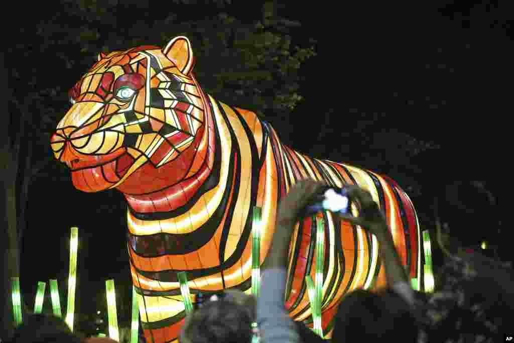 Escultura do tigre de Sumatra apresentada em Sydney na Austrália celebrando o centésimo aniversário do Jardim Zoológico de Taronga.