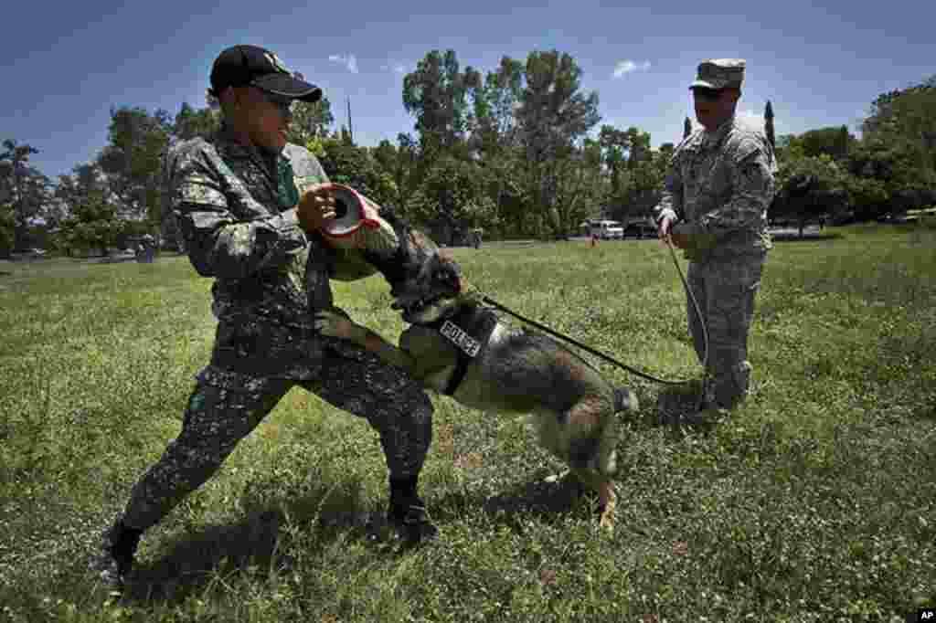 菲律賓克拉克空軍基地 (2012年4月19日) 美菲聯合軍演中的犬訓練項目。