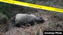 Seekor gajah Sumatera ditemukan mati di Gampong Seumanah Jaya, Kecamatan Ranto Peureulak, Kabupaten Aceh Timur, Provinsi Aceh, Kamis (21/11). (Courtesy: BKSDA Aceh)