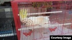 Burung kakaktua putih jambul kuning yang berhasil disita (courtesy: KLHK)