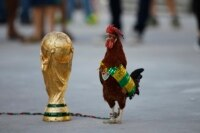 World Cup Rooster