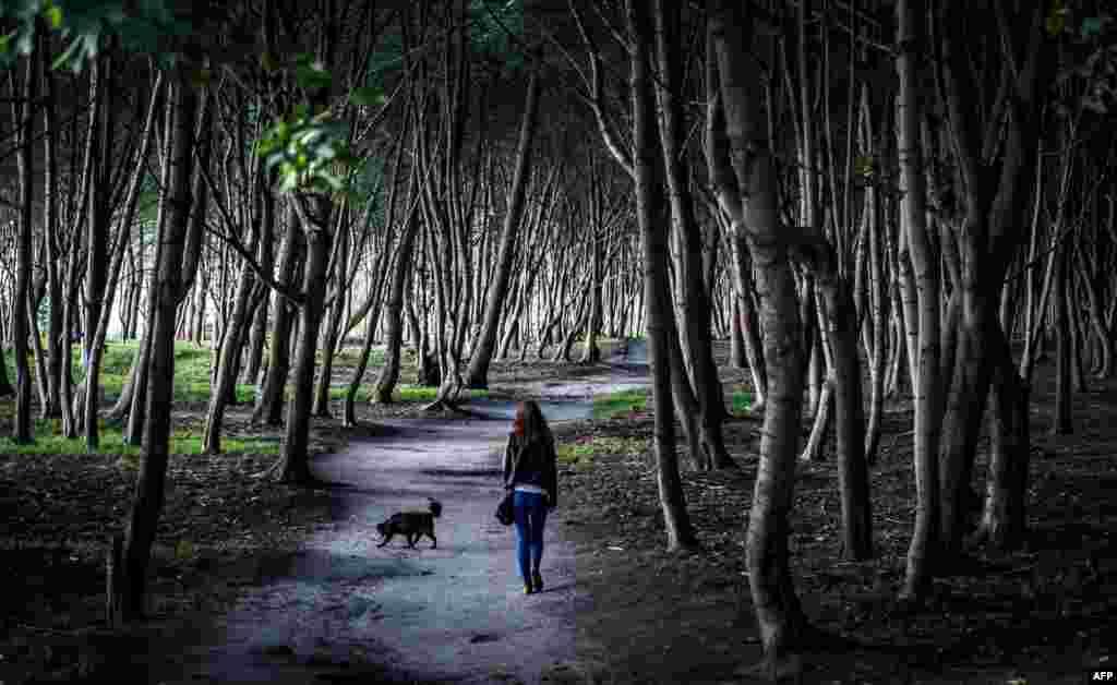 Seorang perempuan membawa anjingnya berjalan di sebuah hutan di desa Yantarny, di pinggiran Kaliningrad, Rusia.