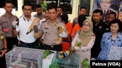 Sejumlah burung dilindungi diamankan petugas setelah berusaha diselundupkan dalam botol plastik dan kardus dari Papua ke Surabaya (Foto: VOA/Petrus)