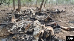 The remains of elephants killed by poachers in Boubou Ndjida National Park, Cameroon