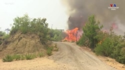 Թուրքիայի հարավում ուժեղ անտառային հրդեհներ են. կան զոհեր