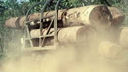 Moçambique perdeu quatro milhões de hectares de florestas nos últimos 15 anos