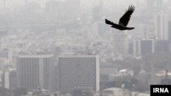 سازمان حفاظت محیط زیست ایران، بنزین تولید شده در پتروشیمی ها را سرطانزا اعلام کرده است
