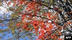 Vì sao lá đổi màu vào mùa thu?