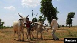 Năm 2003, lãnh đạo của 53 quốc gia Châu Phi đồng ý phân bổ ít nhất 10% ngân sách quốc gia đầu tư vào nông nghiệp và chăn nuôi.