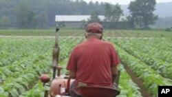 امریکہ میں تمباکو کی متبادل فصلوں کی حوصلہ افرائی
