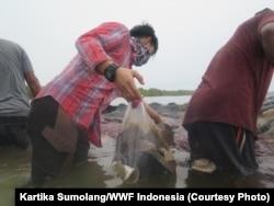 Ditemukan sampah dengan seberat total 5,9 kilogram dari perut paus yang didominasi sampah plastik, Wakatobi, Sulawesi Tenggara, Selasa, 20 November 2018. (Foto: Kartika Sumolang/WWF Indonesia)