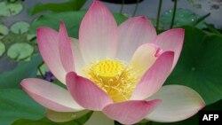 Tam Bảo của tôi: 3 tuyển tập Thiền Thi song ngữ của Cư sĩ Nguyên Giác
