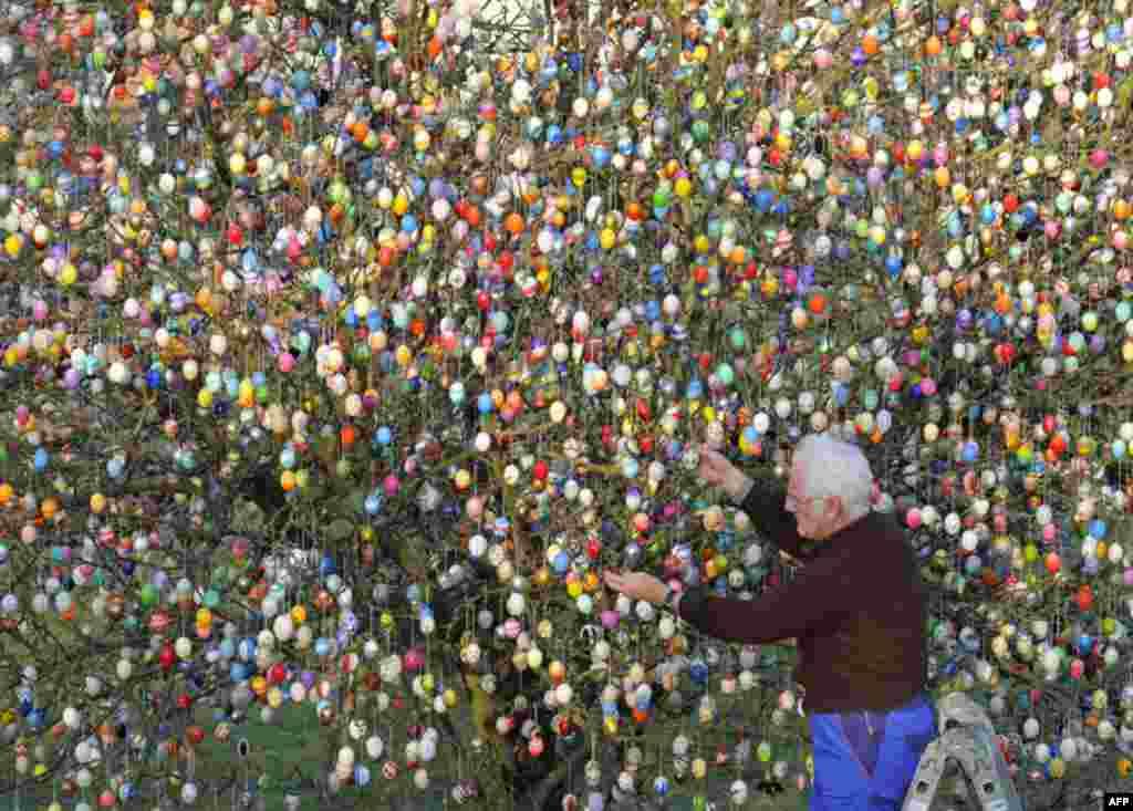 Мешканець німецького міста Заальфельд використав 10 тисяч великодніх яєць для декорації дерева.