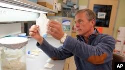 Dr. Stephen Badylak ຈາກ ສູນກາງການແພດຂອງ ມະຫາວິທະຍາໄລ Pittsburgh ກຳລັງກວດສອບ extracellular matrix