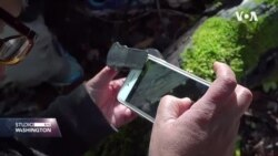 iNaturalist - aplikacija koja za vas prepoznaje prirodu