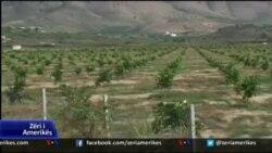 USAID, mbështetje për kultivimin e mandarinës në Shqipëri