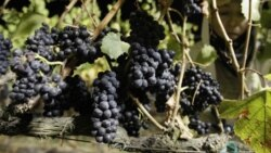 Some of the most exciting information comes by way of the grapevine
