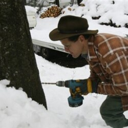 Vermont native Eric May drills a hole to tap a maple tree for sap at his home in Ira, Vermont