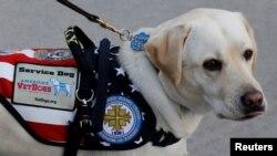 """Chú chó của ông Bush """"cha"""", tên Sully, đến viếng chủ lần cuối tại Quốc hội Mỹ hôm 4/12."""