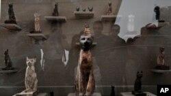 مصر کے شہر ثقارہ سے دریافت ہونے والی بلی کے حنوط شدہ ڈھانچے کی نمائش۔ فائل فوٹو