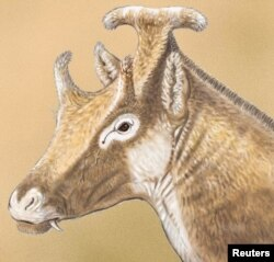 """An artist' illustration shows a reconstruction of Xenokeryx amidalae, meaning """"strange horn of Amidala,"""" in this image released Dec. 2, 2015."""
