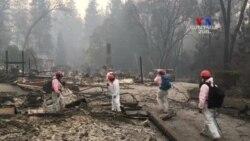 Անտառային հրդեհներն ԱՄՆ-ում տարեց տարի ավելանում են ու մեծանում