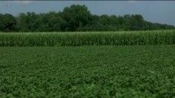 Уряд США оголосив про виділення $12 млрд допомоги американським фермерам. Відео