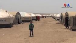 Suriye'de Sahipsiz Mülteci Kampı: Roj
