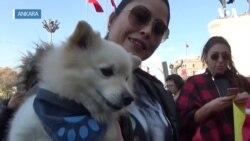 Hayvan Hakları Savunucularından Meclis'e Çağrı