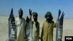 بلوچستان میں تلور کا غیر قانونی شکار ۔ فائل فوٹو