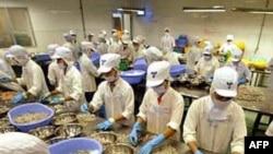 Công nhân Việt Nam làm việc tại một hãng tôm xuất khẩu
