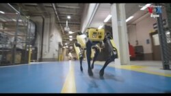 Ford Puts Robotic Dog to Work
