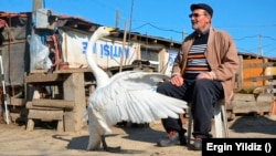 Marzan's swan named Garip, follows Marazan everywhere when Garip is out of his pen. Photo taken on February 6, 2021. (AP Photo/Ergin Yildiz)