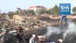 Ces courageux Egyptiens artisans du charbon de bois