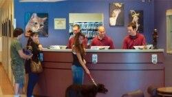 Old Towne Pet Resort in Springfield, Virginia