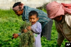 A child holds up plucked weeds as he helps his family on a farm near Phnom Penh, Cambodia, Aug. 2013. (AP Photo/Heng Sinith)