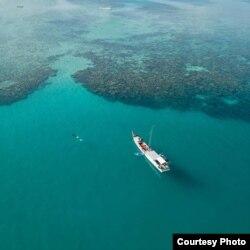 Kawasan terumbu karang di Taman Nasional Karimunjawa (Foto: Greenpeace Indonesia)