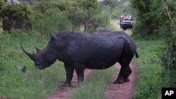 Tê giác trong Công viên Quốc gia ở Nam Phi