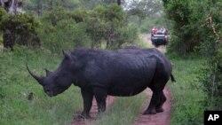 Rinoceronte, Parque de Kruger, África do Sul (Foto de arquivo)