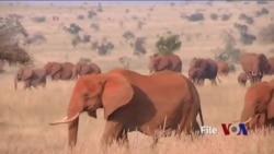 肯尼亚环境部长:中肯持续合作打击野生动物走私
