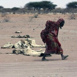 A woman walks past remains of cattle in the drought-stricken Eladow area in Wajir, northeastern Kenya, last month